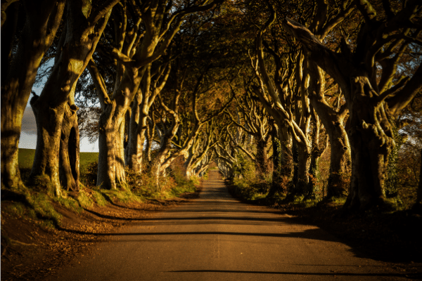 The Dark Hedges, Tree Lined Rd, County Antrim, Northern Ireland